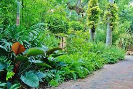 stunning tropical landscaping ideas for small backyard home design