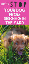 the 25 best stop dogs from digging ideas on pinterest stop