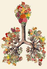 Human Anatomy And Physiology 9th Edition Marieb And Hoehn Best 25 Anatomy And Physiology Textbook Ideas On Pinterest