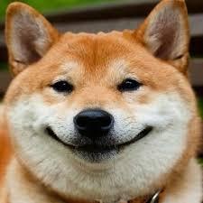 Smug Meme - smug dog meme praiseemperordt twitter