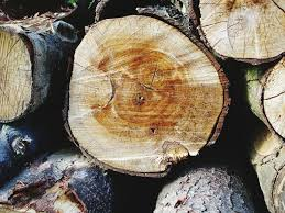 primary timber products harvested when selling trees