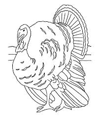 realistic thanksgiving turkey lineart coloring download