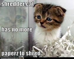 Sad Cat Memes - lolcats depressed lol at funny cat memes funny cat pictures