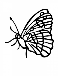 amazing butterfly coloring pages with butterflies coloring pages