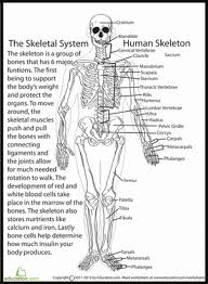 human skeletal system science worksheets life science and fifth