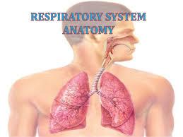 Human Anatomy Respiratory System Respiratory System Anatomy