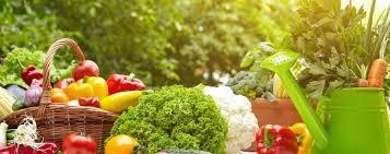 atkins and ketosis protein carbs and fat ratios atkins low