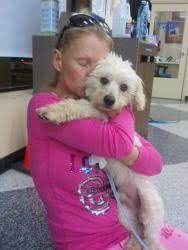 bichon frise years this week puppies pinterest bichon frise dog and poodle