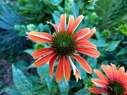 plante vivace soleil sim brico jardin septembre 2015