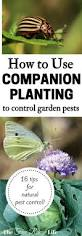 Container Vegetable Gardening Ideas by Best 25 Organic Container Gardening Ideas On Pinterest