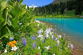 Colorado Wildlife Tours images Wildflowers waterfalls and wildlife tours in ridgway colorado jpg
