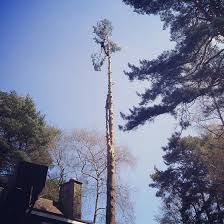 tarbet tree care tree surgeons surrey sussex gallery