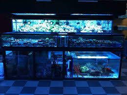 lighting stores in san fernando valley tropical fish store in san fernando valley you ve never seen a fish