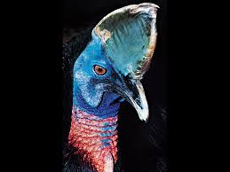 8 birds that can u0027t fly britannica com