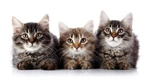 how i ended up with four cats at age 20