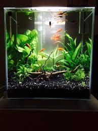 Aquarium Decoration Ideas Freshwater Planted 6 Gallon Eheim Page 2 The Planted Tank Forum Nano