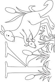 k for kangaroo coloring pages coloringstar