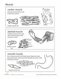 top 10 anatomy coloring pages for your toddler anatomy ads and