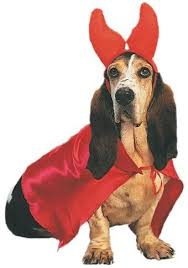 Cute Small Dog Halloween Costumes 25 Small Dog Halloween Costumes Ideas