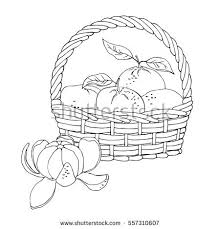 fruit basket stock images royalty free images u0026 vectors