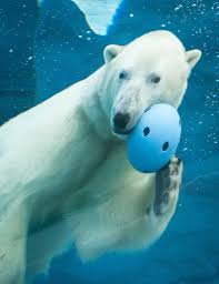 Detroit Zoo Night Lights by Detroit Zoo Stays Open Polar Bears Wolverines Can Go Outside