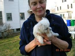 Red Roof Inn Southborough Ma by State Has Long File On Disgraced Dog Breeder Lemaire News