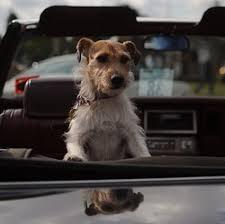 comment empecher mon chien de monter sur le canapé mon chien a peur de monter dans ma voiture que faire eduquer