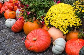 Pumpkin Patch Frisco Tx by 5 Fun Activities To Do This Fall In Plano Texas This Year