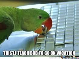 Parrot Meme - jealous parrot by isunwukongz meme center