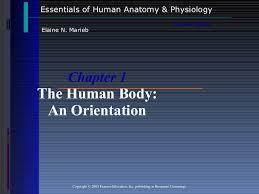 Human Anatomy And Physiology By Elaine Marieb Pdf Anatomy And Physiology Chapter 1 Introduction To Anatomy And Physio U2026