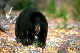 California Wildlife images Wildlife encounters in norcal how to stay safe jpg