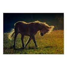 Horse Decor For The Home 288 Best Posters Canvas Prints U0026 More Images On Pinterest