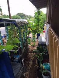 backyard aquaponics u2022 view topic nitrates are zero
