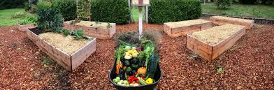 last chance to plant quick fall vegetables for september