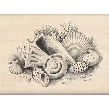 where to buy seashells buy the inkadinkado sketches st seashells at