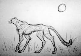 cheetah sketch art amino