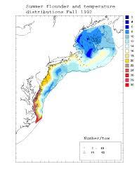 Cape Cod Water Temp - summer flounder