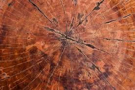 wood tree rings images Tree rings old wood texture background cross section annual ring jpg