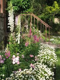 Beautiful Garden Pictures Shasta Daisy