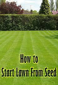 best 25 sod grass ideas on pinterest cat grass plum seed and