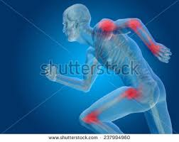 3d Knee Anatomy Body Joints Stock Images Royalty Free Images U0026 Vectors Shutterstock