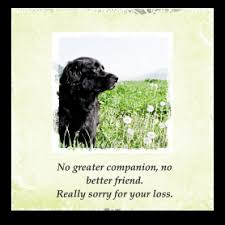 dog condolences dog sympathy cards