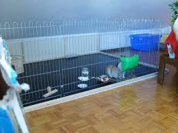gabbie per conigli nani usate veterinario e casa a prova di coniglio