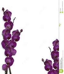 floral border purple orchids stock photo image 8262620