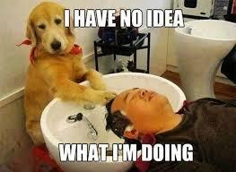 Dog Funny Meme - funny dog memes for canine lovers sayingimages com