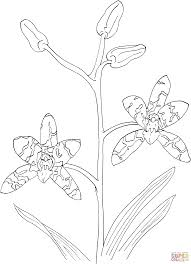african ansellia or leopard orchid coloring page free printable
