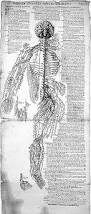 file anatomical sketches valverde nerves early 17th century
