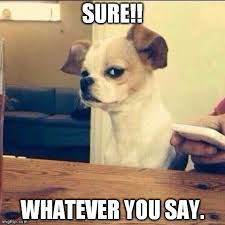 Memes De Chihuahua - luxury memes de chihuahua suspicious chihuahua memes image memes