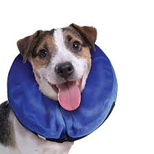 Buster Comfort Collar Top 5 Best Dog Recovery Cones U0026 E Collars For Dogs 2017
