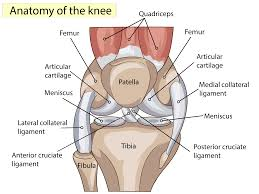 Anterior Fibular Ligament Torn Acl Now What Advanced Orthopaedic Specialists